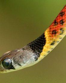 Ngủ mơ thấy rắn là điềm lành hay dữ?